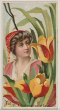 Tulip: A Declaration of Love, from the series Floral Beauties and Language of Flowers (N75) for Duke brand cigarettes, 1892.