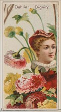 Dahlia: Dignity, from the series Floral Beauties and Language of Flowers (N75) for Duke brand cigarettes, 1892.
