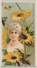 Sunflower: Haughtiness, from the series Floral Beauties and Language of Flowers (N75) for Duke brand cigarettes, 1892.