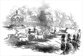 The Deer Shooting at Gotha - deer breaking through the chasseurs and keepers, 1845. Creator: Unknown.