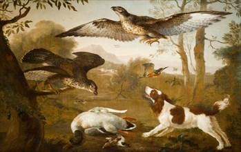 Dog Guarding a Dead Duck From Birds of Prey