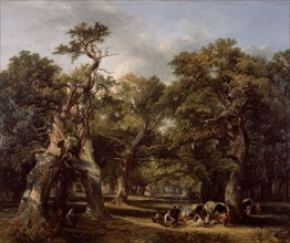 A Forest Glade
