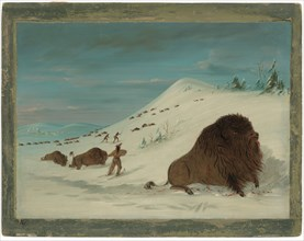 Buffalo Lancing in the Snow Drifts - Sioux
