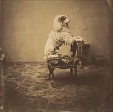 [Empress Eugénie's Poodle]