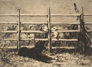 Moutons parqués