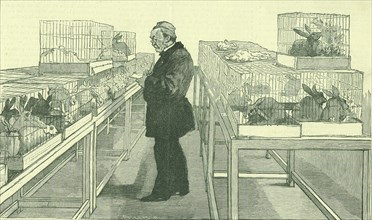 Louis Pasteur (1822-1895) French chemist, in his laboratory at the Ecole Normale, Paris, during his work on hydrophobia.  Around him are cages full of the rabbits he used during his experiments.  From...