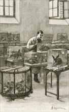 Laboratory used by Louis Pastuer (1822-1896) during research on hydrophobia (Rabies)  at the Institut Pasteur, Paris,.  Engraving, Paris, 1873.