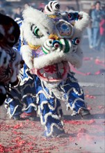 Chinese Lion Dancers perform in elaborate Lion costumes during Chinese New Year Celebrations