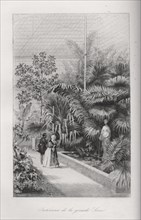 Intérieur de la grande serre du Jardin des Plantes de Paris