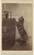 Expectation; Henry Pointer, British, 1822 - 1889, about 1865; Albumen silver print