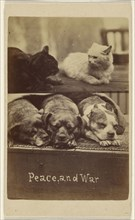 Peace, and War; Henry Pointer, British, 1822 - 1889, about 1865; Albumen silver print