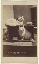 A happy new year; Henry Pointer, British, 1822 - 1889, about 1865; Hand-colored albumen silver print