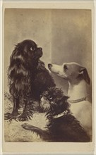 Floss, Daisy & Fairy; Dogs of Barroness sic McClifford. Painted by Mrs. Pointer; Henry Pointer, British, 1822 - 1889)