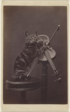Cat on a stool playing a violin; Henry Pointer, British, 1822 - 1889, March 1872; Albumen silver print