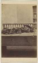 The Brighton Cats: nine cats asleep on a porch; Henry Pointer, British, 1822 - 1889, about 1872; Albumen silver print