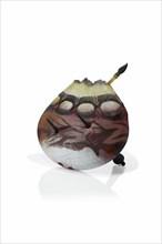 Morris, Artifact: Braided Pouch