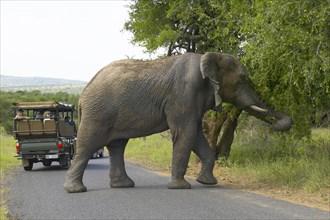 De la Harpe, Touristes et éléphant