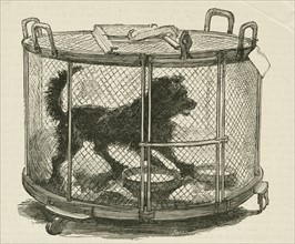 Cage containing inoculated used by Louis Pasteur