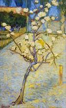 Van Gogh, Poirier en fleurs