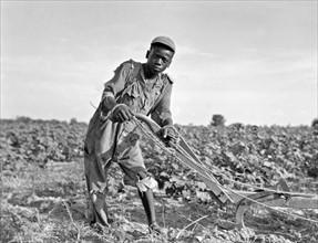 sharecropper in a field in Georgia