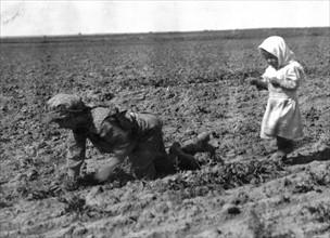 Sugar Beets Field
