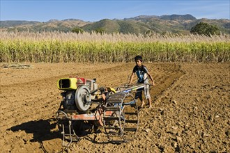 Boy using a walking tractor or a single-axle tractor for field work on a sugar cane field