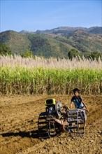 Boy with a walk-behind tractor working on a sugar cane field