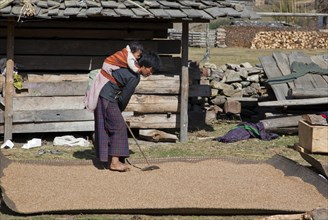 Woman with small child on her back working on crop