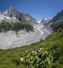 Glacier tongue Mer de Glace