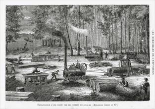 Exploitation d'une forêt avec des machines-outils, 1878