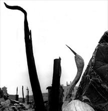 Hiroshima dévastée par la bombe atomique lancée le 6 août 1945.