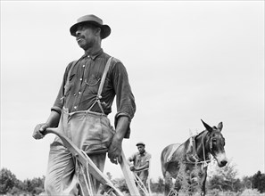 man, African-American ethnicity, farmer, agriculture, historical,