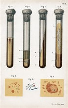 Various types of bacteria, 1889. Artist: Unknown