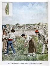 Destroying the grasshopper, 1901. Artist: Unknown