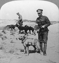 First aid dogs, World War I, c1914-c1918. Artist: Realistic Travels Publishers