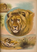 'The Lion', c1900. Artist: Helena J. Maguire.