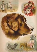 'The Dog', c1900. Artist: Helena J. Maguire.