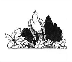 'Among the Branches Dwelt a Nightingale', c1930. Artist: W Heath Robinson.