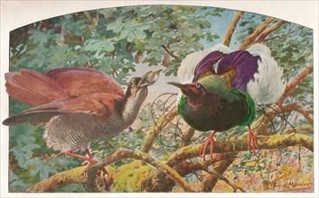 'Twelve-wired Birds of Paradise', c1910, (1911). Artist: Louis Fairfax Muckley.