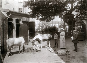 Horses and a dog in a stable yard in the centre of Landskrona, Sweden, 1912. Artist: Unknown