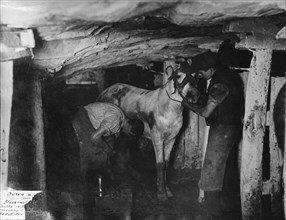 A blacksmith and his striker attending a pit pony, Clay Cross Colliery, Derbyshire, c1910. Artist: Albert Heath