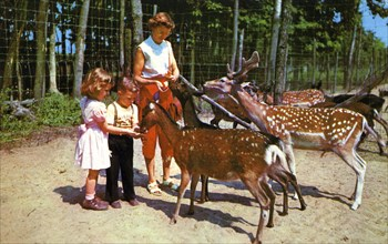 A mother and her two children feeding deer in an enclosure, USA, 1955. Artist: Unknown
