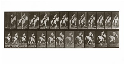 Galloping Horse with Rider, Plate 635 from Animal Locomotion, 1887 (photograph)