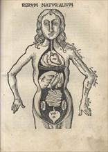 Margarita Philosophica. Anatomy, 1504. Artist: Reisch, Gregor (1467-1525)