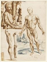 Écorché with Portrait of Andreas Vesalius (1514-1564), 1545.