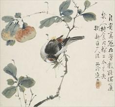 A Chinese Hwamei eating a grasshopper, 1857. Artist: Jin Yuan.