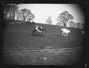 Quarry Field, Rumney, Cardiff, 1892. Creator: William Booth.