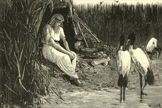 Anysis Concealed in the Marshes of the Delta', 1890.