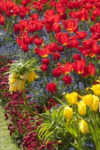 Regent's Park - Springtime floral displays in Regent's Park, London