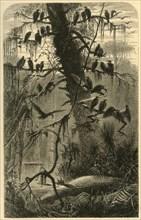 'Waiting for Decomposition', 1872.  Creator: Frederick William Quartley.